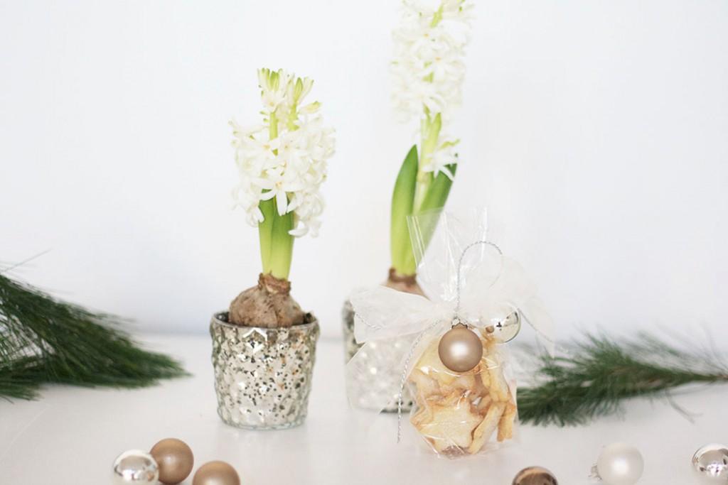 DIY Geschenkidee Geschenk basteln WeihnachtenMitbringsel_Hyazinthen und Plätzchen in der Weihnachtszeit