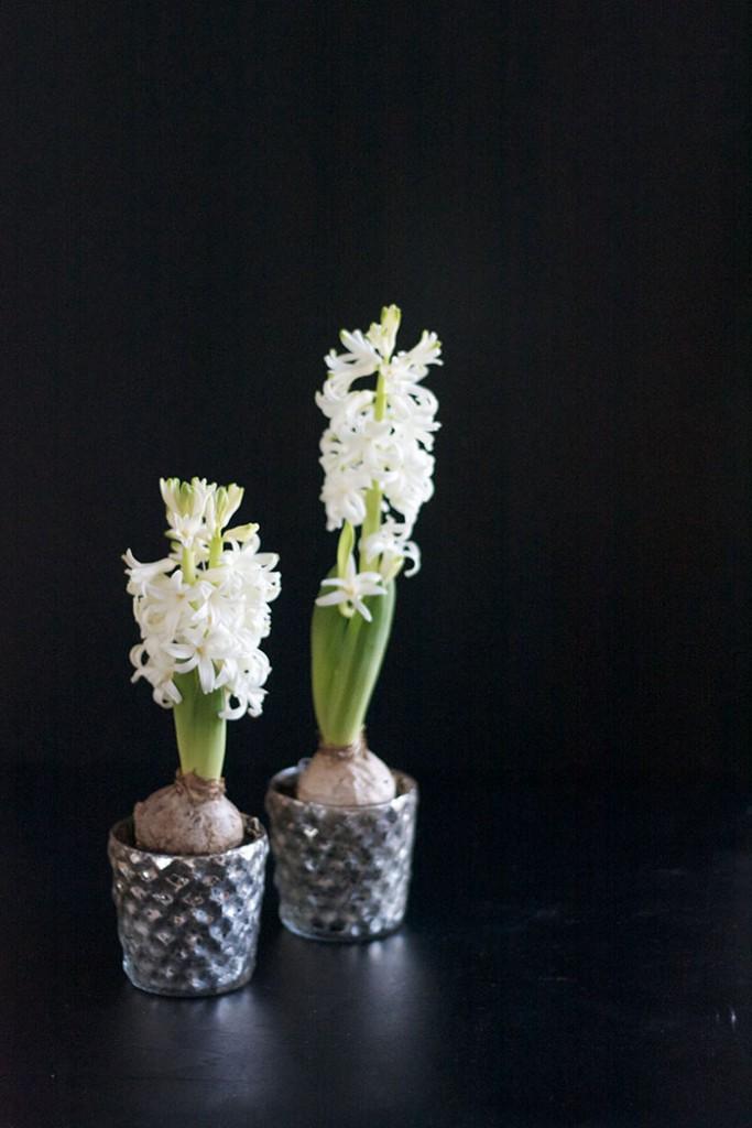 DIY Geschenk selber machen zum Mitbringen in der Weihnachtszeit - erste Frühlingsboten Hyazinthen - lindaloves.de DIY & Deko Blog